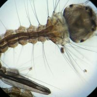 tn_scopemonkey-iphone-ipod-touch-microscope-kickstarter-27.JPG