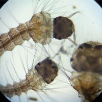 tn_scopemonkey-iphone-ipod-touch-microscope-kickstarter-28.JPG